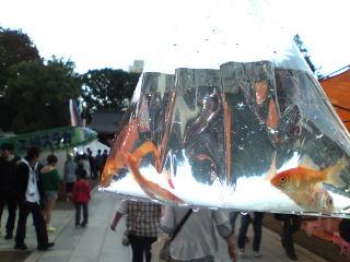 福島の秋祭り