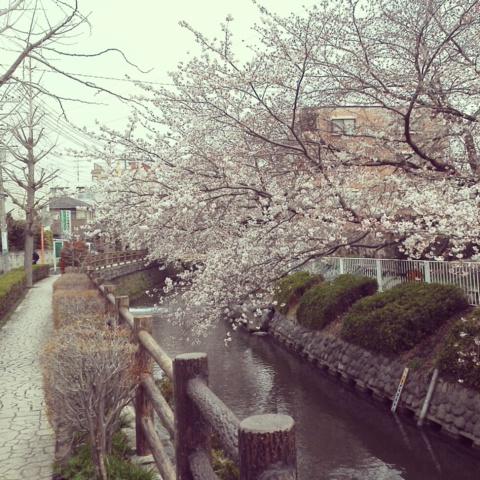 桜が咲きだしました!